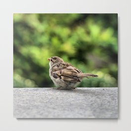 Little Feather Tasting Metal Print