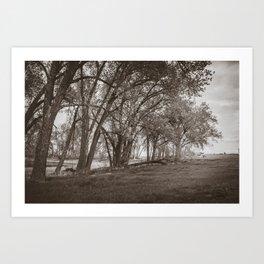 Cottonwoods at Lee's Farm, Sepia Art Print
