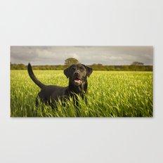 Labrador in the Spring Barley Canvas Print