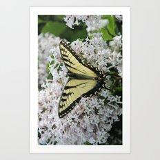 Butterfly Delight Art Print