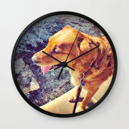 Beautiful dog golden retriever on the swimming pool Wall Clock