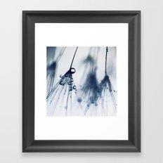 dandelion - blue Framed Art Print