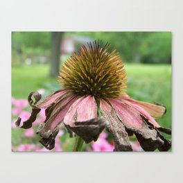 Wendy Wendell Canvas Print