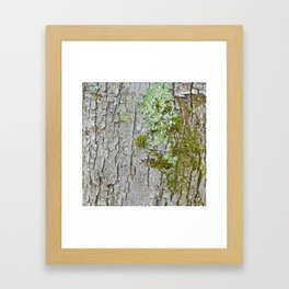Mossy Bark Framed Art Print