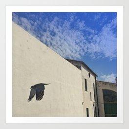 Dove Wings Art Print