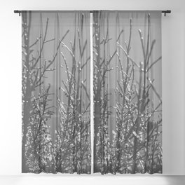 Icy Branches - Black and White Sheer Curtain