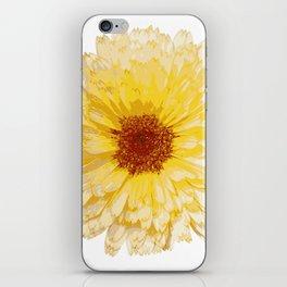 Beautiful Yellow Marigold Vector Isolated iPhone Skin
