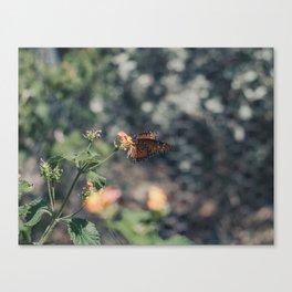 Grainy Monarch Canvas Print