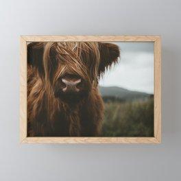 Scottish Highland Cattle Framed Mini Art Print