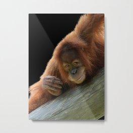 Smiling Young Orangutan Metal Print