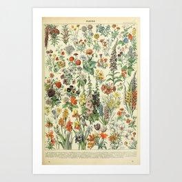 Adolphe Millot Vintage Fleurs Flower 1909 Kunstdrucke