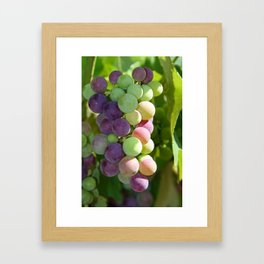 Wine on the Vine Framed Art Print