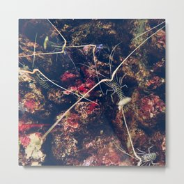 Shrimp Paradise Metal Print
