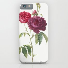 Purple French Rose, Rosa gallica purpuro-violacea magna from Les Roses (1817-1824) by Pierre-Joseph Redoute iPhone Case