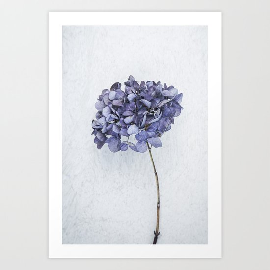 Dried Blue Hydrangea Art Print