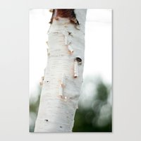 birch Canvas Prints featuring Birch by Katie Kirkland