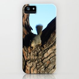 A Squirrel at Griffith Park, California iPhone Case