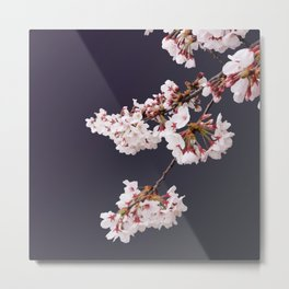 Cherry Blossoms (illustration) Metal Print
