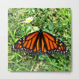 ButterFlowerFly  Metal Print