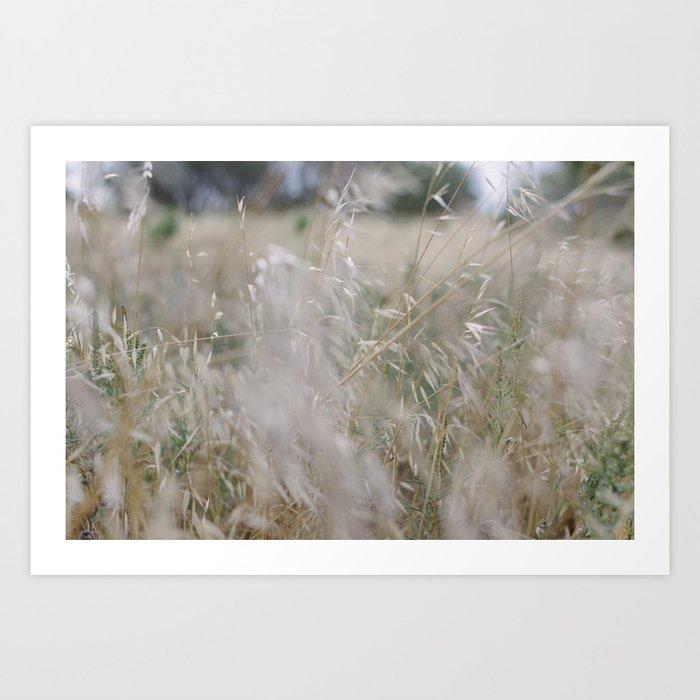 Tall wild grass growing in a meadow Art Print