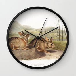 Bachmans Hare (Lepus Bachmani) from the viviparous quadrupeds of North America (1845) illustrated by Wall Clock