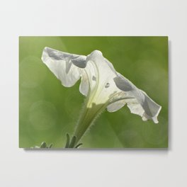 White Petunia Metal Print