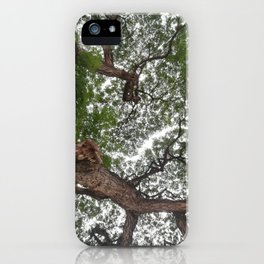looking up tree branch iPhone Case