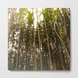 The Tall Trees Metal Print