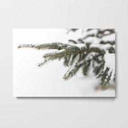 Snowy Spruce Needles 9 Metal Print