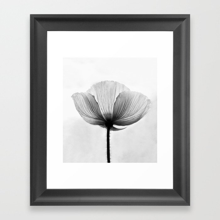 Xray flower transparent black white poppy petals framed art print