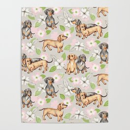 Dachshunds and dogwood blossoms Poster