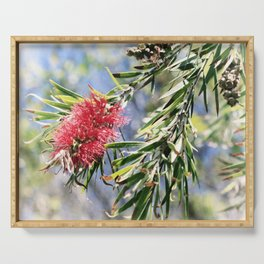 Beautiful Red Bottle Brush flower Serving Tray