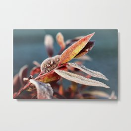 Winter leafs Metal Print