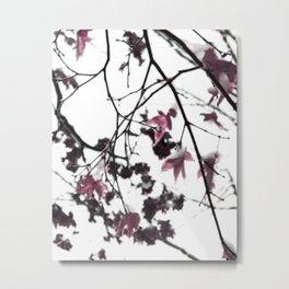 Icy Pink Japanese Maple Metal Print