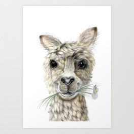 Alpaca eating Daisies Art Print