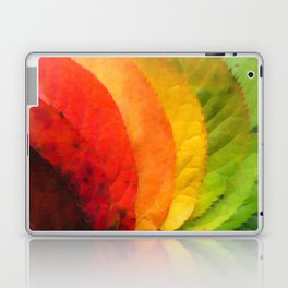 Collection beautiful colorful autumn leaves Laptop & iPad Skin