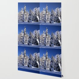 Snow covered trees in the forest. Winter day with blue sky. Wallpaper