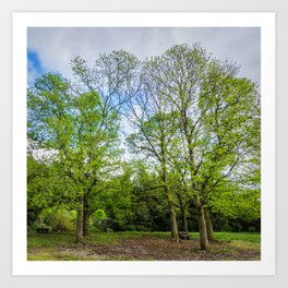 The six trees Art Print