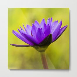 Blue Lotus Metal Print