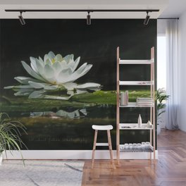 One lonely lily pad bloom in the channel Wall Mural