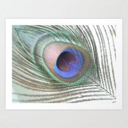 PEACOCK FEATHER IV Art Print