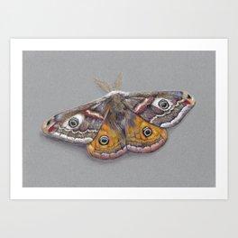 Emperor Moth Art Print