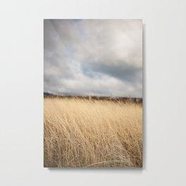 Winter in the vineyard Metal Print