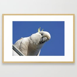 Cockatoo sees you while your sleeping Framed Art Print