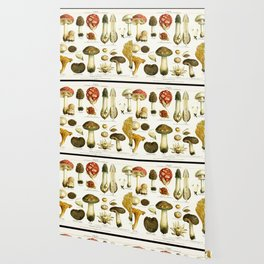 Mushrooms Wallpaper
