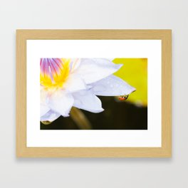 Ladybug And Water Lily - A Tropical Adventure By Priya Ghose  Framed Art Print