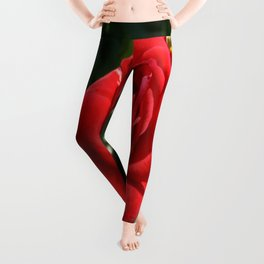 Beautiful Climbing Red Rose Close Up Photograph Leggings