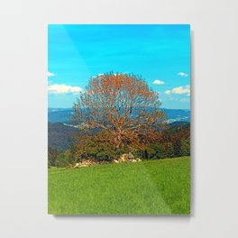 Lonely old tree in springtime scenery Metal Print