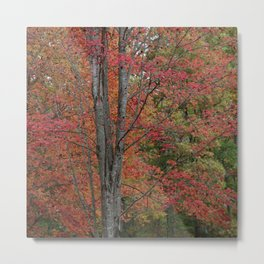 Fall Tree - Red - Square Metal Print