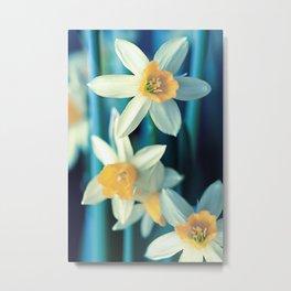 Narcisses(29) Metal Print